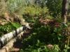 Levadaweg mit üppigen Hortensienbüschen