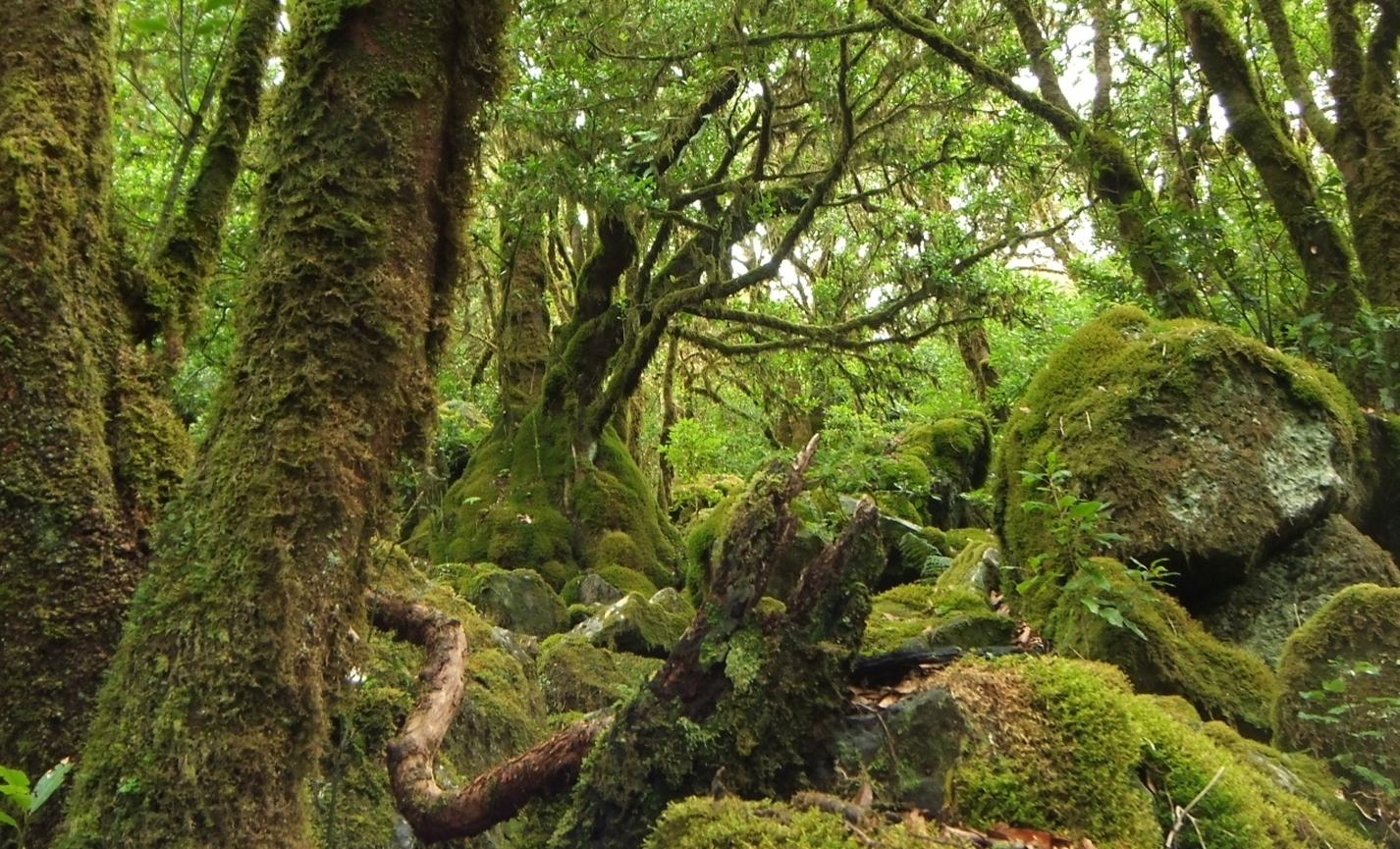 Urwald auf der Inselnordseite